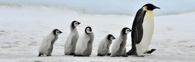 Penguin_habitat_feature1.jpg
