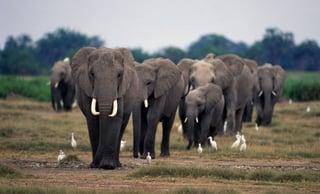 animal-pictures-elephants-wallpapers-hd-photos-elephant-wallpaper-18.jpg